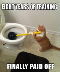 cat cleaning the toilet