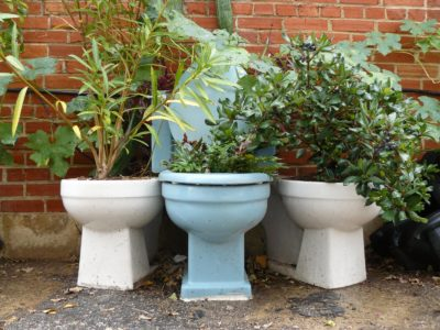 Beautiful plants in old toilet bowls